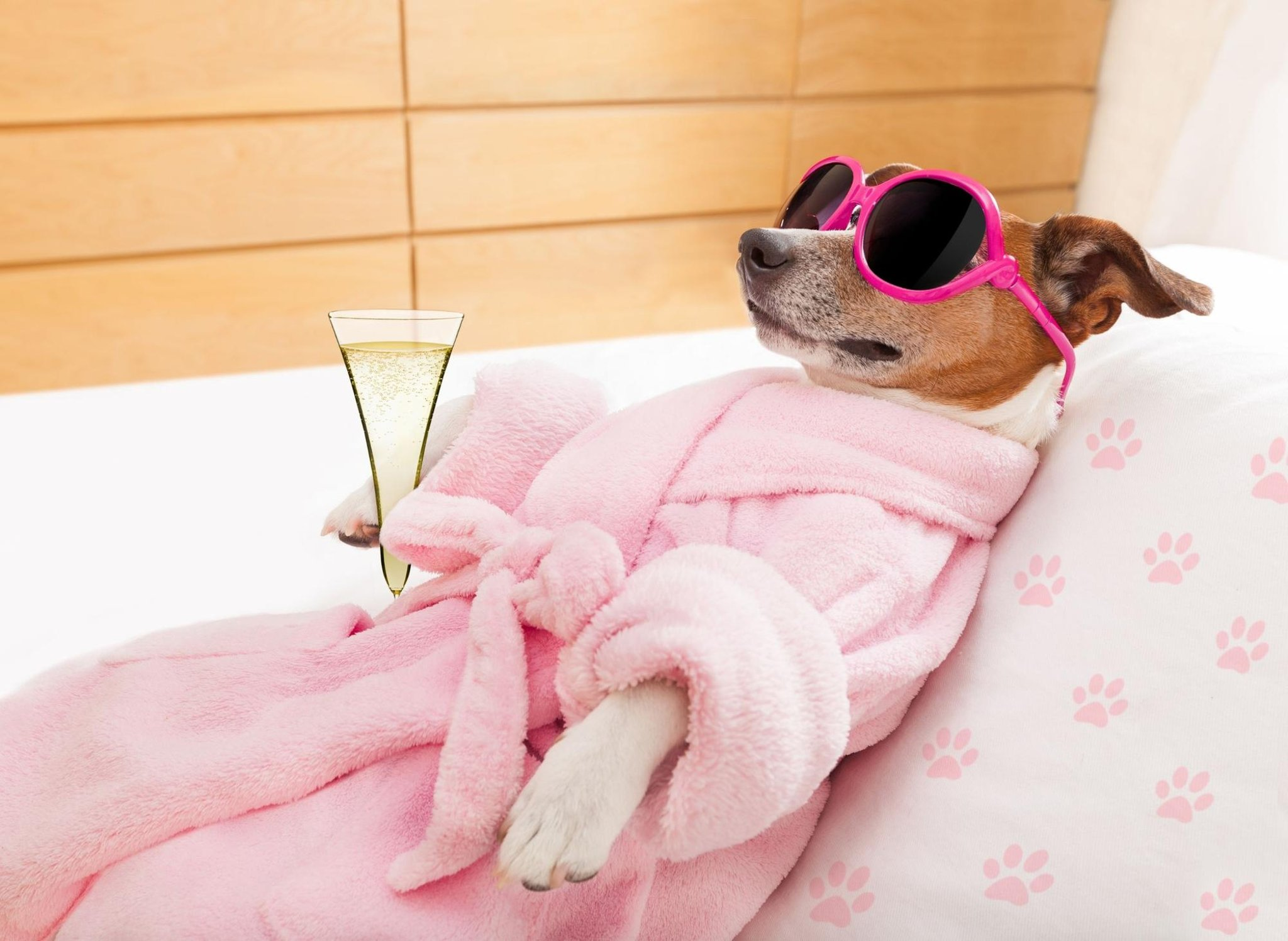 10 breeds of adorable dog that are high maintenance and need plenty of pampering