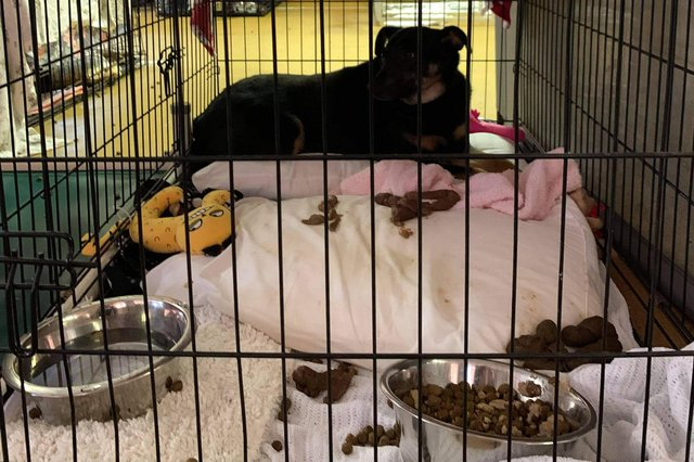 The image of the dog in a small crate surrounded by faeces has been widely shared.