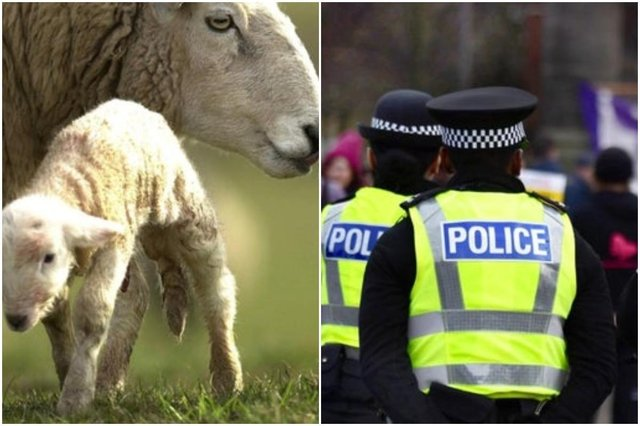 Police have warned dog owners to keep their pets on a lead when walking near livestock.