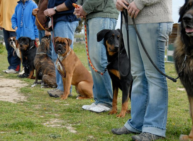 These are 10 of the easiest breeds of dog to train.