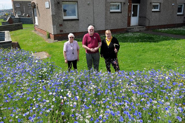 Neighbours, Celia Proctor, Alistair Brownlie, and Nancy Varney with the wildflowers at Buchanan Court. Pic: Fife Photo Agency.