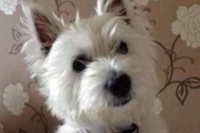 Stewart and Wendy Danskin's beloved dog Molly
