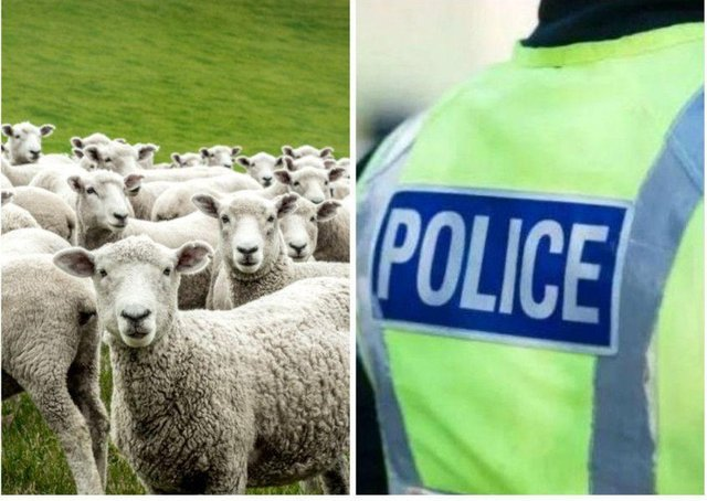 Dog owners have been warned it is legal for farmers to shoot their pets, if they are putting livestock in danger.