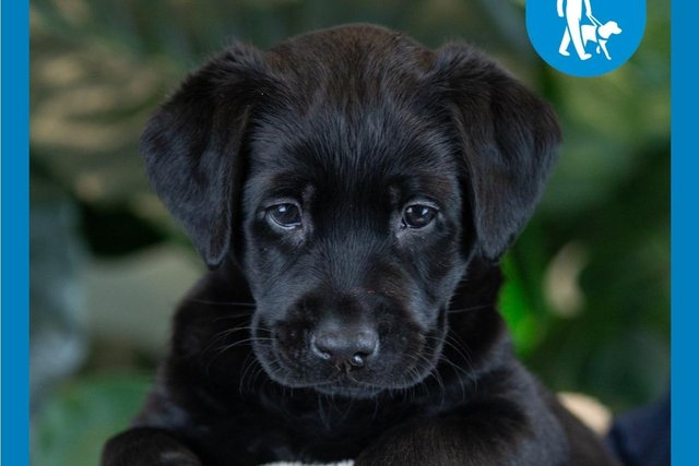 Selsey, the six week old puppy sponsored by Kirkcaldy businessman Ritchie Landels
