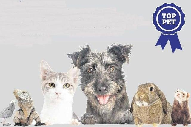 Does your pet have what it takes to win our great competition?