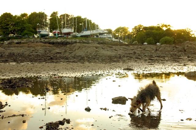 A dog plays on Dalgety Bay beach