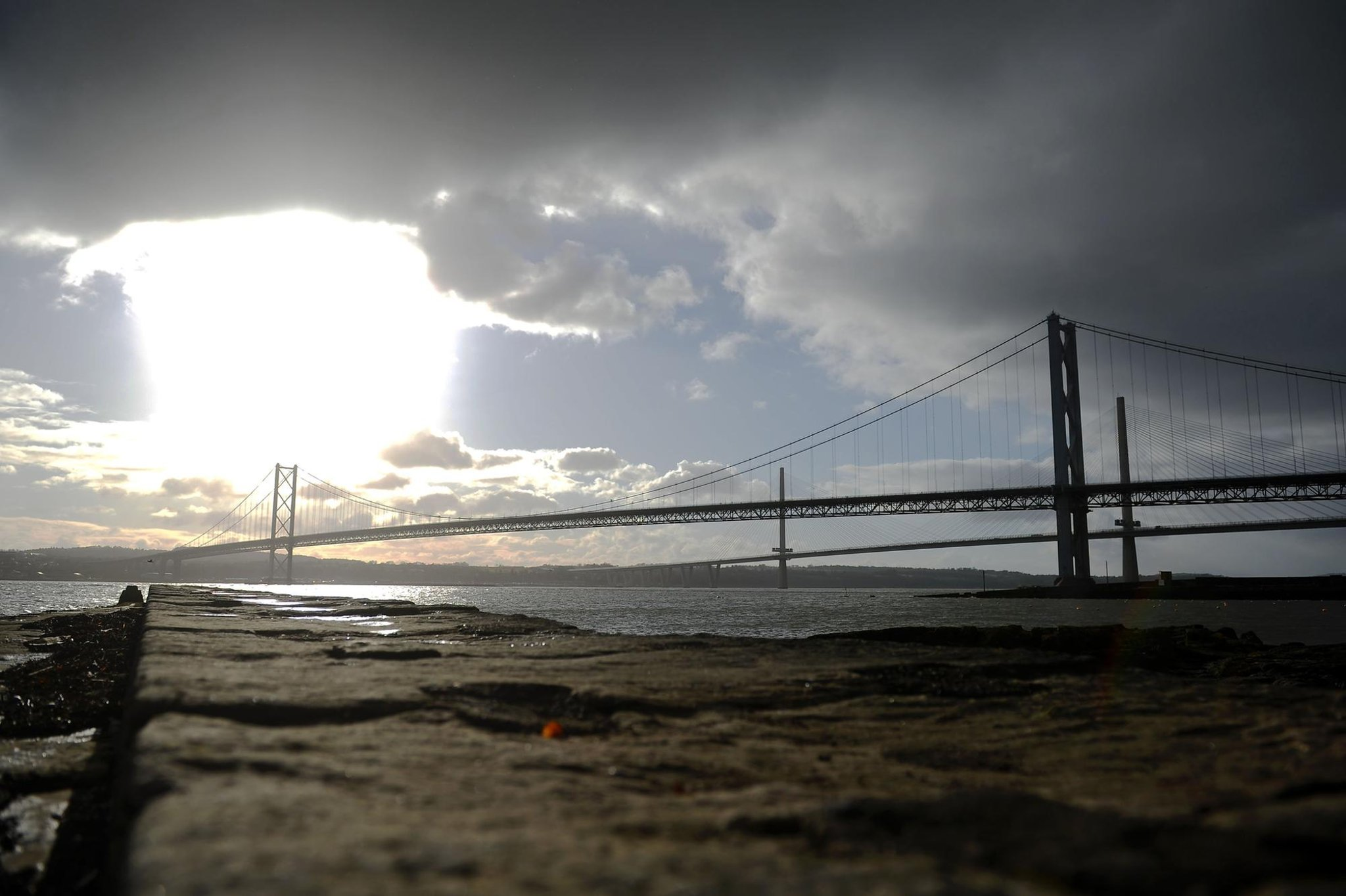 Forth Road Bridge: Special measures to protect seabirds while work gets underway