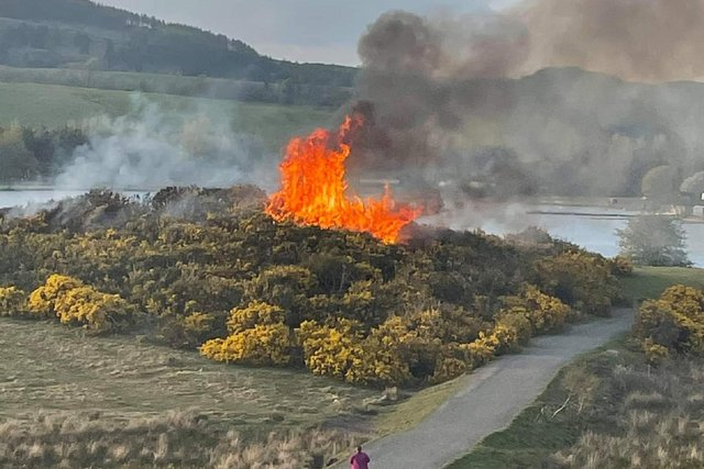 Bushes at Lochore Meadows on fire (Pic: Fife Jammer Locations)