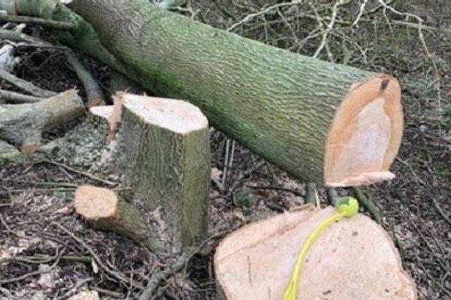 The tree felling was ruled to be legal.