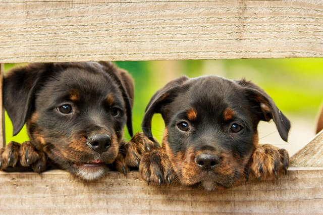 Kirkcaldy MP Neale Hanvey is calling for tougher legislation to crackdown on illegal puppy farming.