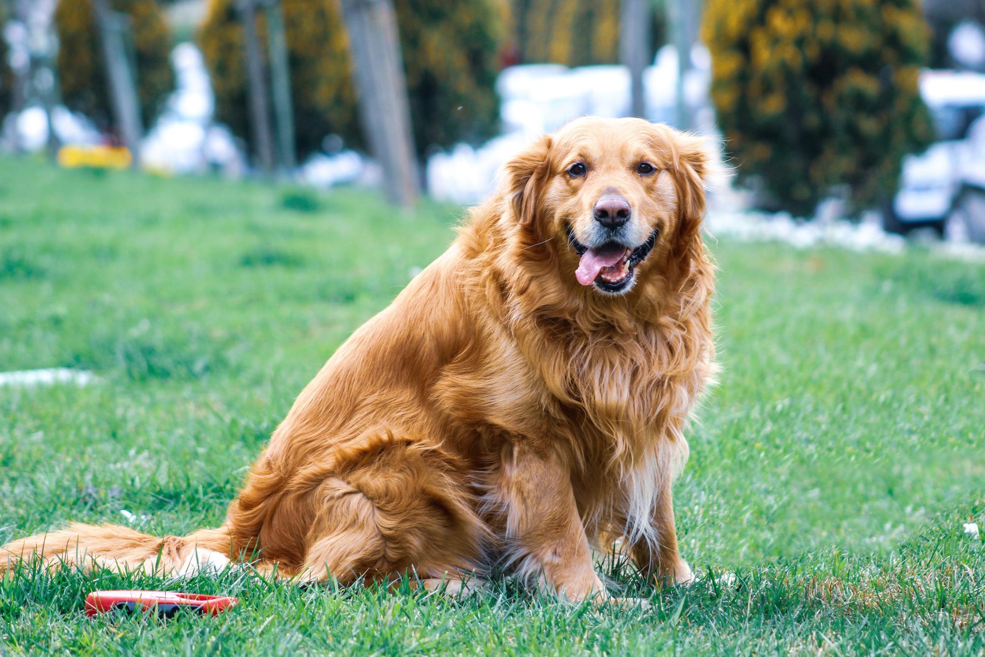 Fife dog owners warned on hayfever outbreak